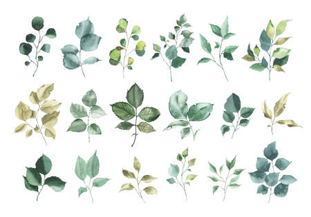 Collection of watercolor greenery floral rose leaf plant forest herbs leaves spring flora isolated on white background. Botanical decorative illustration for wedding invitation card
