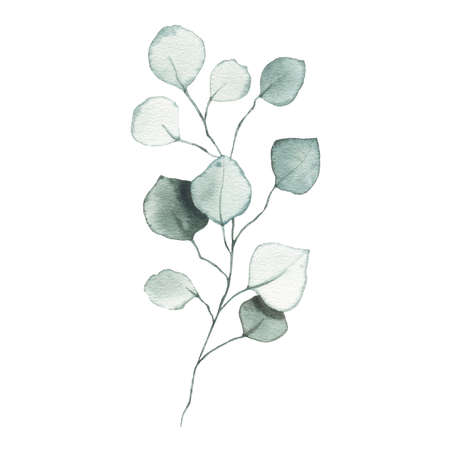 Watercolor eucalyptus dusty green leaf plant herb spring flora