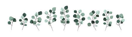 Silberdollar-Eukalyptusgrün hinterlässt florale Zweige Vektorgrafik im Aquarellstil. Handgezeichnete mintgrüne Laubpflanze rustikal botanisch für Hochzeitseinladungskarte Save the Date Design