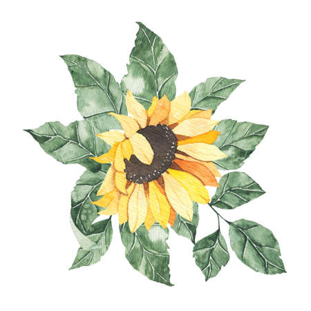 Watercolor sunflowers bouquet with green leaves isolated. Floral summer spring autumn yellow flowers arrangement blossom boho for wedding invitation save the date card illustration