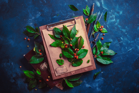 Tree branch with green leaves and berries on a wooden clipboard. Botanist or school project concept. Floral flat lay with copy space
