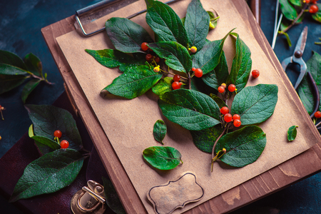 Tree branch with green leaves and berries on a wooden clipboard. Botanist or school project concept. Floral close-up with copy space