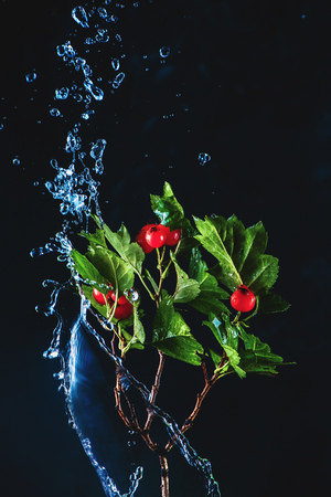 Green leaves on a tree branch in a splash of water on a dark background. The high-speed autumn concept with copy space
