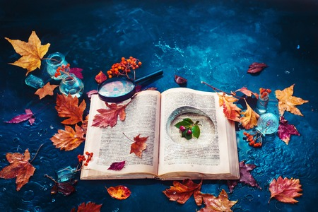 Secret storage book with last summer green leaves in autumn rain. Preserving fleeting joys concept with copy space