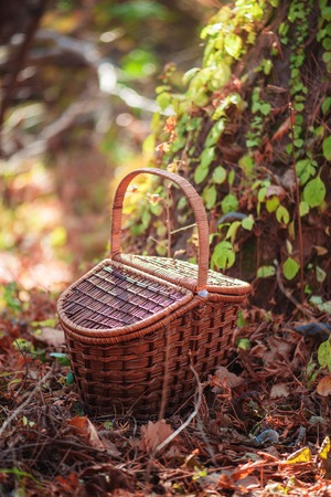 Picnic basket in an autumn forest in sunlight with copy space