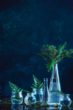 Clear glass bottles and vases with green fern leaves on a dark background. Natural decorations concept on a dark background with copy space Standard-Bild