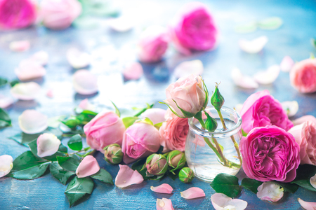 Pink peony roses, petals, and leaves on a wet rainy background in the morning light. Spring header with copy space