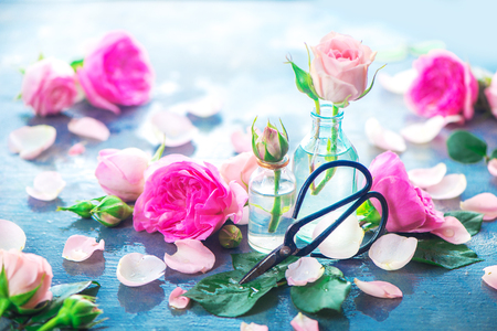 Pink roses in tiny glass bottles with Chinese gardening scissors on a neutral gray background with copy space. Spring gardening concept
