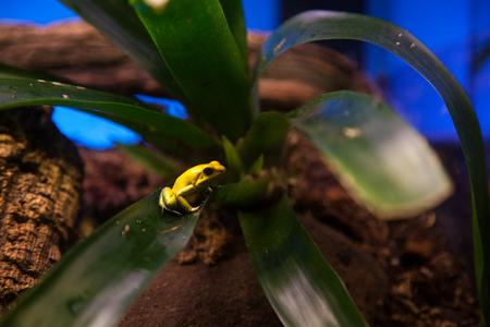 yellow amphibian