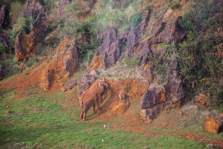 elephant in captivity in cabarceno national park in cantabria, spain