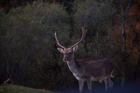 Deer in captivity in the Cabarceno national park, Cantabria, Spain