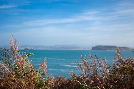 sea with dry grass Standard-Bild