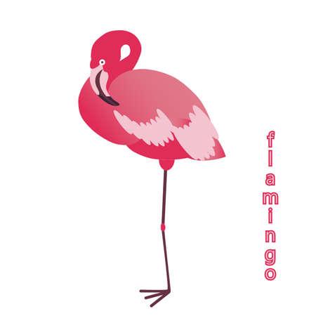flamenco ave: pájaro del flamenco. ilustración. Vectores