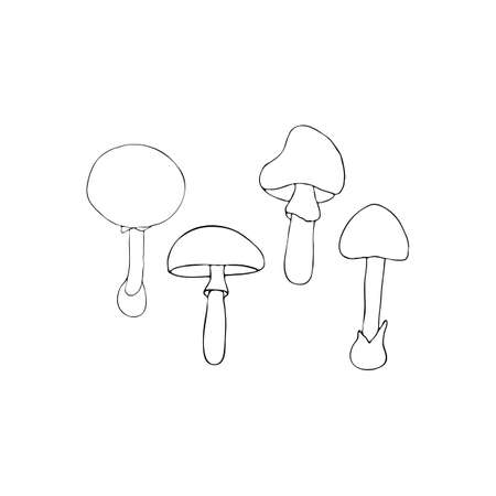 a fly agaric: Hand drawn vector illustration of poisonous mushrooms - Amanita muscaria, Amanita phalloides and Amanita pantherina. Isolated on white background.