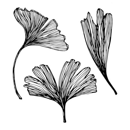 Hand drawn Ginkgo biloba leaves set. Vector outline collection of ginkgo leaf. Set with floral exotic leaves for your design of cosmetics packaging and other products.