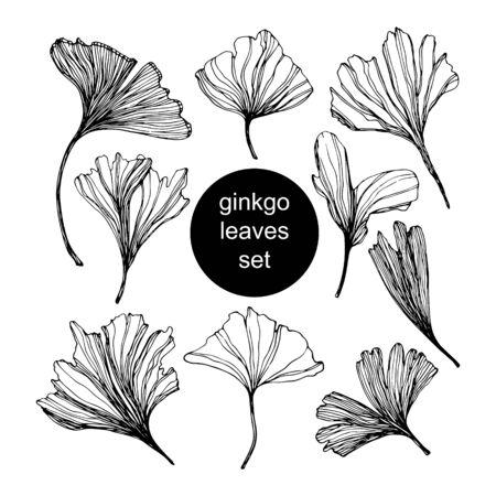 Set of Ginkgo biloba leaf hand drawn contour line. Vector sketch illustration. Isolated ginkgo illustration element on white background.