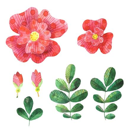 Set of watercolor stylized dog roses elements flowers, leaves, flower bud