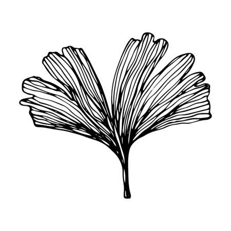 Hand drawn Ginkgo biloba leave. Vector outline ginkgo leaf. Floral exotic leave illustration for your design.