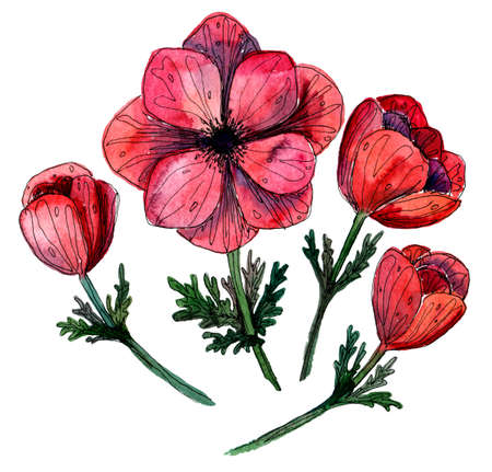 Stylized watercolor sketch illustration of red anemone flowers and buds. delicate coral flowers for your design. Stok Fotoğraf