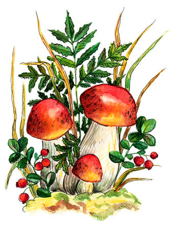 watercolor illustration autumn mushrooms and lingonberries on the background of fern and herbs. Cute illustration of an autumn forest.
