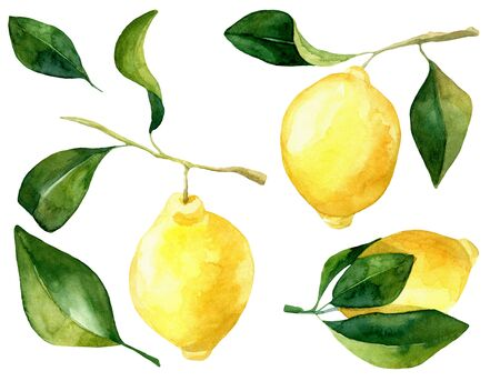Set of hand rawn watercolor lemons wirh leaves. Botanical illustration of yellow citrus fruits. Ideal for food packaging design. . Element for design of invitations, movie posters, fabrics and other objects. Isolated on white. Stock Photo