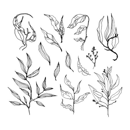 Set of leaves. Hand drawn decorative elements. Vector illustration. Decorative Elements for design of printing, souvenirs, wedding invitations, etc. 일러스트