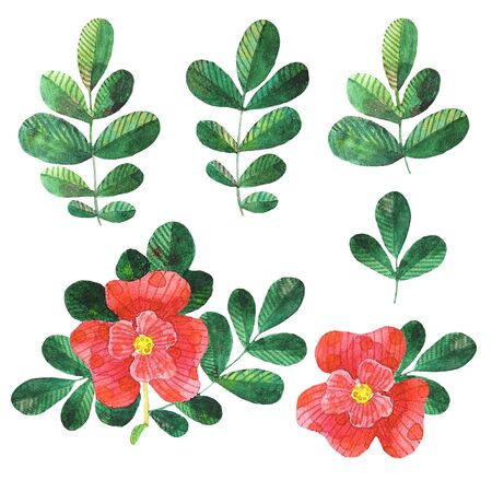 Set of watercolor stylized dog roses elements flowers, leaves
