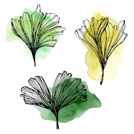 Hand drawn Ginkgo biloba leaves illustration with watercolor stains. Outline composition of green ginkgo leaf. Floral exotic leaves for your design of cosmetics packaging and other products. Stok Fotoğraf