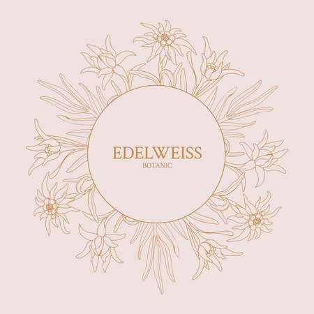 Edelweiss. Frame with edelweiss flowers on a pink background. Vector Illustration