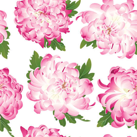 Chrysanthemum. Seamless pattern with flowers of pink chrysanthemum on a white background.