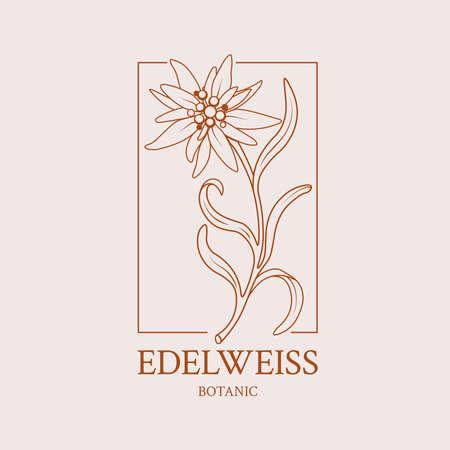 Flower design of a hand-drawn flower of Edelweiss