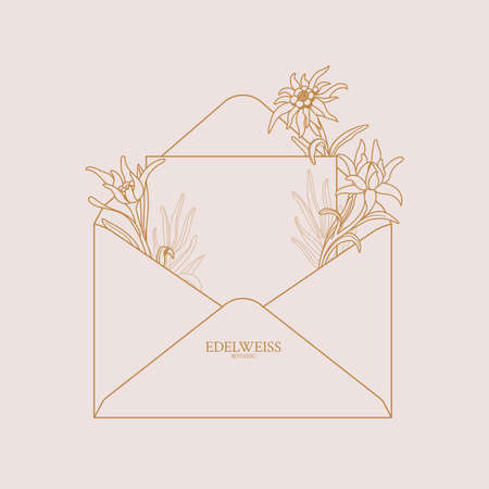 Edelweiss. Envelope with edelweiss flowers. Floral envelope with place for text, can be used as invitation, card, banner. Copy space. Vector stock illustration on a pink background. Vector Illustration