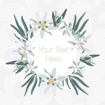 Edelweiss. Invitation to the wedding with edelweiss flowers. Stock vector illustration.