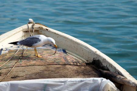 wingspread: seagull Stock Photo