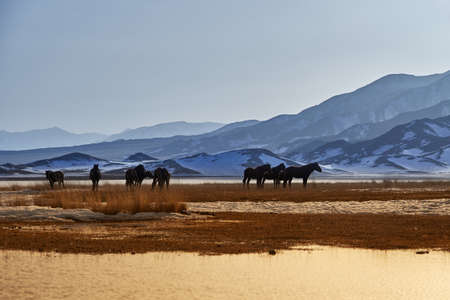 Horses near Khan-Tengry mountan, Kazakhstan Stock Photo