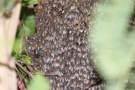 closeup of bees on honeycomb in apiary - selective focus, copy space backgrounds