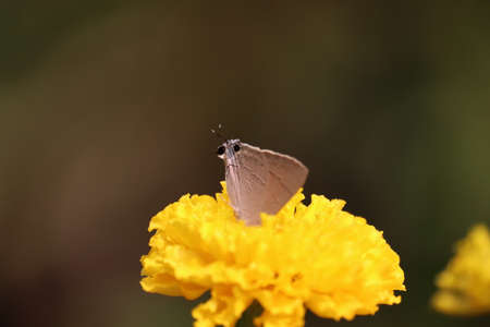 Butterfly on marigold flower in jungle the beauty of nature
