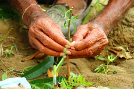 grafting trees in spring. Gardening vegetable plant and fruit plant in garden Reklamní fotografie