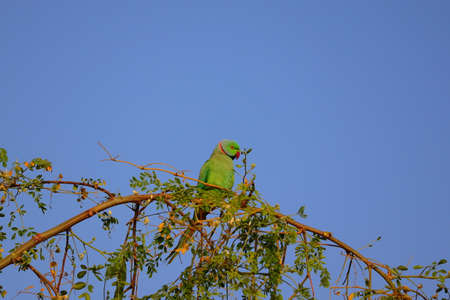 parrot or macaw rest on tree branch in farm
