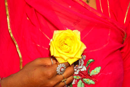 yellow rose flower on women hand with red sari , rose on women hand Standard-Bild - 143295824