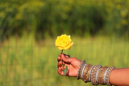 yellow rose hold on girl hand with nature defocus background and copy space Standard-Bild - 143295833