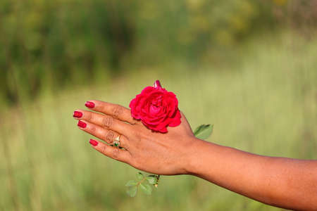 a red rose with red nails polish girls hand and blurred nature background and copy space Standard-Bild - 143295834