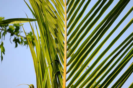 close up of palm leaf in formal garden 版權商用圖片