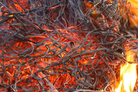 close up of embers of burning fire background Banco de Imagens