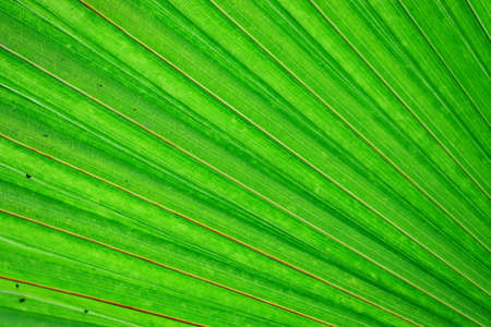 close up of green palm leaf background theme Фото со стока