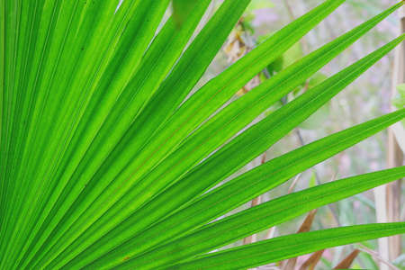 macro image of palm leaf background theme with copy space