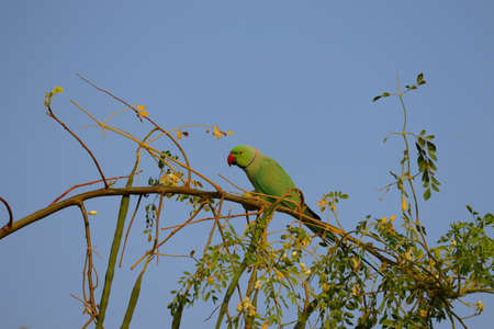 green parrot image , HD background, free bird background