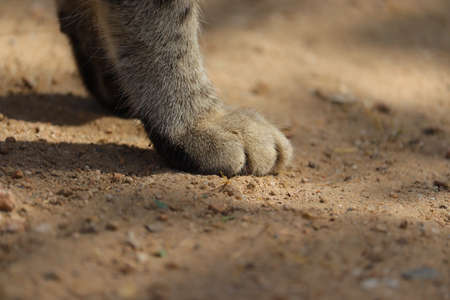 Close up of a cat's feet in light shade and sunlight