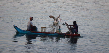 A brown pelican bird hunts fish while two fishermen row wooden boats in a lake