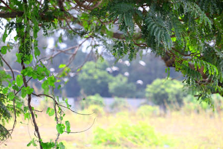 Blur tree leaves frame , garden outdoor background, blurry tree nature with bokeh light background, Blur nature park in spring and summer-can be used for display or montage your products. 免版税图像